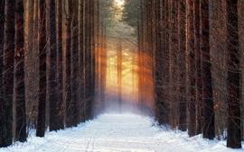Árvores, neve, caminho, raios de sol, inverno