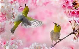 Preview wallpaper Two birds, pink sakura, flowers, spring