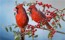 Dos pájaros cardenales, bayas rojas, ramitas