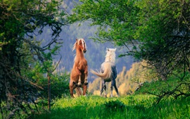 Two horses, grass, trees, green