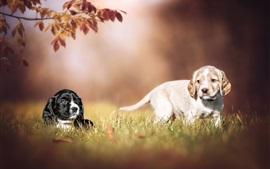壁紙のプレビュー 2匹の子犬、犬、草、ボケ