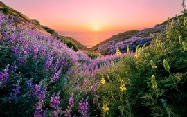 USA, San Francisco, beautiful flowers, sea, sunset