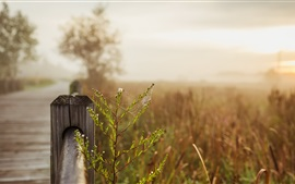 Preview wallpaper Web, plants, fence, bokeh