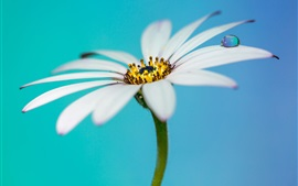 White flower, petals, water drops, bokeh