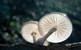 Cogumelos brancos, luz