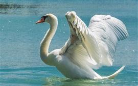 Preview wallpaper White swan, wings, lake