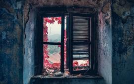 Window, red leaves, dust