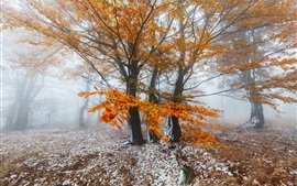 Preview wallpaper Winter forest morning, yellow leaves, snow