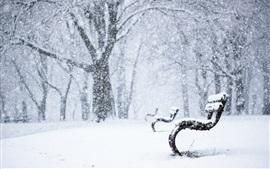 Winter park, neve, banco, árvores, neve
