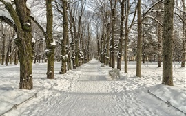 Winter, snow, trees, path, park