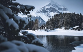 Winter, trees, river, houses, snow