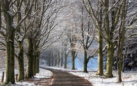 Winter, trees, road, snow, shadow
