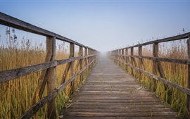 Caminho de madeira, cerca, juncos, nevoeiro, manhã