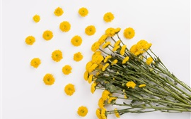 Preview wallpaper Yellow daisy, bouquet, white background