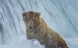 Preview wallpaper Alaska, bear, waterfall