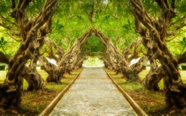 Preview wallpaper Alley, trail, plumeria trees