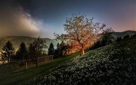 Apple tree, flowers, slope, fence, dusk