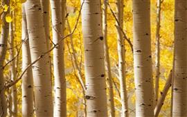 Осень, роща