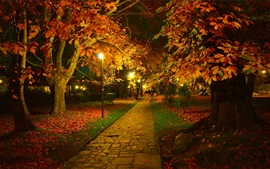 Outono, parque, trilha, noite, folhas, lâmpadas