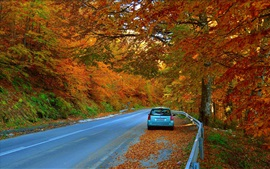 Autumn, trees, road, car