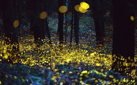 Beautiful forest, glare circles, night