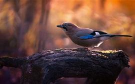 Vogel, Baum, Hintergrundbeleuchtung