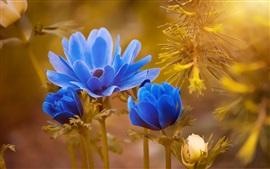 Flores azuis florescem, primavera