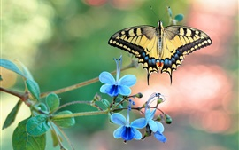 Preview wallpaper Blue flowers, butterfly, wings, insect