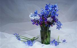 Prímulas azuis, vaso, primavera