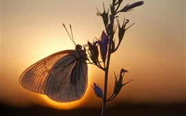 Butterfly, flowers, backlight