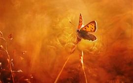 Butterfly, light, orange style