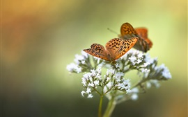 Preview wallpaper Butterfly, white little flowers, spring