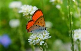 Butterfly, white little flowers