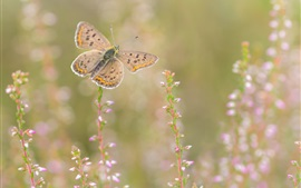 Preview wallpaper Butterfly, wildflowers