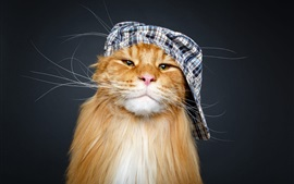 Preview wallpaper Cat, hat, funny animal
