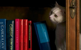 Preview wallpaper Cat in bookcase