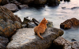 Preview wallpaper Cat, rest, stones, sea