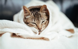 Preview wallpaper Cat sleep, woollen blanket