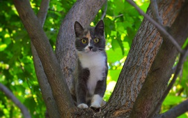 Gato, árvore, fundo verde