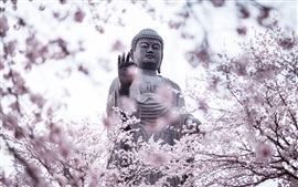 Preview wallpaper Cherry blossoms, buddha, statue