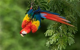 Preview wallpaper Colorful feather parrot, red macaw, nature