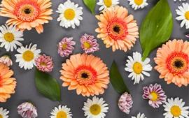 미리보기 배경 화면 다채로운 꽃, gerbera, 카모마일, 흰색, 핑크, 오렌지