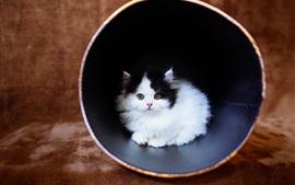 Симпатичный пушистый котенок
