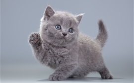 Preview wallpaper Cute gray kitten learn to walk