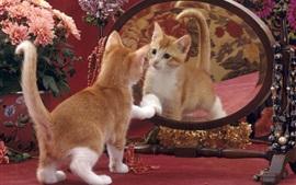 Симпатичный котенок смотреть на зеркало