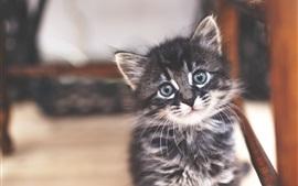 Gato pequeno bonito olhar para você, animal de estimação peludo