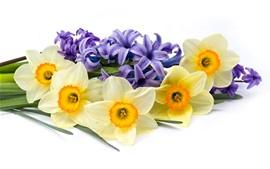 Preview wallpaper Daffodils and hyacinths, flowers, white background