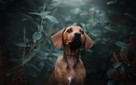 Dog look at you, plants