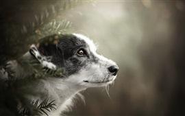 Вид сбоку собаки, голова, глаз, боке