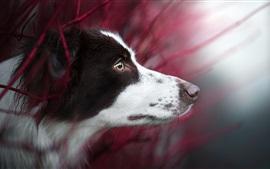 Vista lateral del perro, cabeza, ojos, bokeh